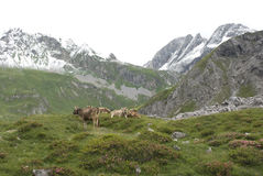 alps австрийские Стоковые Фото