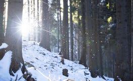 alps покрыли древесины зимы малого снежка места дома швейцарские Идти снег в лесе через деревья Стоковые Фотографии RF