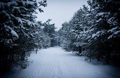 alps покрыли древесины зимы малого снежка места дома швейцарские Стоковые Изображения
