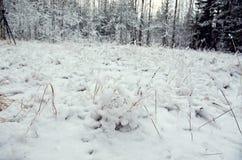 alps покрыли древесины зимы малого снежка места дома швейцарские Стоковая Фотография RF