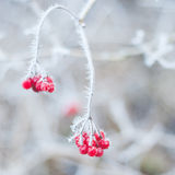 alps покрыли древесины зимы малого снежка места дома швейцарские стоковое изображение