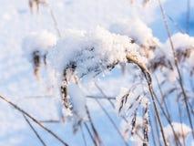 alps покрыли древесины зимы малого снежка места дома швейцарские Стоковое Изображение RF