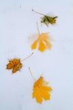 alps покрыли древесины зимы малого снежка места дома швейцарские стоковое фото
