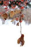 alps покрыли древесины зимы малого снежка места дома швейцарские Стоковые Фотографии RF