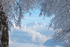 The Alps. Snowy trees and the Alps in background. Copy space Stock Photo