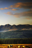 Alps. Sunset over the french massif central with cattle in the foreground Royalty Free Stock Image