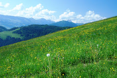 Alps. A meadow in the alps of Austria with some mountains in the background stock photo