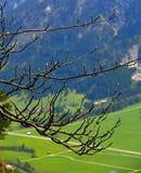 alps Zdjęcie Stock