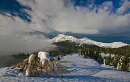 Alps. View on the slovenian alps with old pine in  foreground Royalty Free Stock Photo