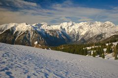 Alps. View on the slovenian alps with old pine in  foreground Stock Photos