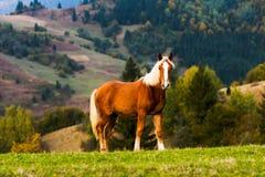 Alps animals Royalty Free Stock Photo