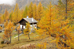 Alps autumn landscape and house. Typical mountain house in autumn landscape in Italy Alps Stock Photography