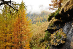 Alps autumn landscape 2. Autumn landscape in Italy Alps area Royalty Free Stock Images