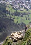 Alps bacy festiwal Obraz Royalty Free