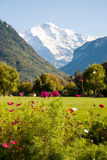 Alps behind Cosmos. In Interlaken, Switzerland Stock Images