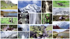 Alps collage. High mountains, flora, fauna and people.