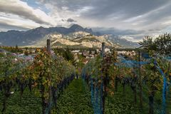 Alpine panorama in Switzerland. The Alps in the day, somewhere near Saint Gallen, Switzerland. The grape field in the mountains Stock Photo
