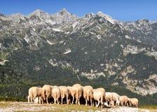 alps Europa julian slovenia Arkivbilder
