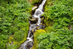 Alps forest stream Stock Images
