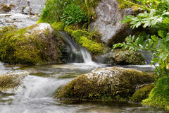 Alps forest stream Stock Photography
