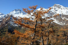 The Alps. Grossglockner glacier in the Alps Royalty Free Stock Images