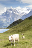 Alps Ii Stock Images