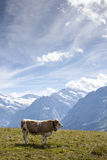 Alps III Royalty Free Stock Photo