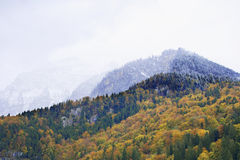 Alps in Interlaken Royalty Free Stock Image