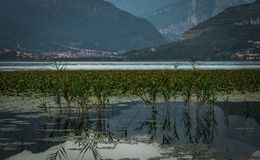 Alps and lake swamp at sunset in summer stock photo