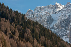 Alps landscape. Beautiful slope of pine trees in front of snow-capped mountains Stock Photo