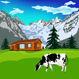 Alps landscape. Dairy cow on a alps mountains green meadow.Alps landscape Stock Image