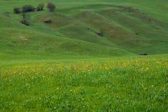 Alps Meadow
