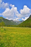 Alps meadow in summer Stock Photos