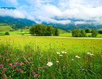 Alps meadow summer view Stock Image