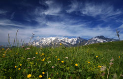Alps with mont blanc. Summer with mont blanc in the background alpine flowers in the foreground Stock Photos
