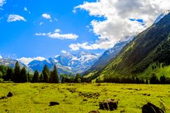 Free Alps Mountain Meadow Tranquil Summer View. Royalty Free Stock Photo - 110283835