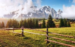 Alps mountain meadow tranquil summer view stock photography