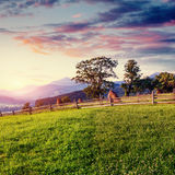 Alps mountain meadow tranquil summer view. Europe Stock Images