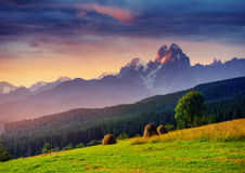 Alps mountain meadow tranquil summer view Royalty Free Stock Images