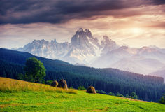 Alps mountain meadow tranquil summer view Royalty Free Stock Photography