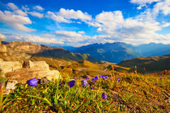 Alps mountains and flowers Royalty Free Stock Photography