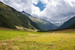 Alps mountains meadows Royalty Free Stock Photos