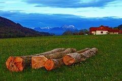 Cut trees Alps mountains spring night meadow Stock Photos