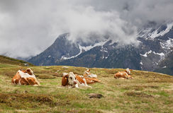 Alps near Mayrhofen. Tirol. Austria Stock Image