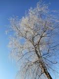alps räknade trän för vintern för schweizare för snow för husplatsen lilla Arkivbild