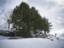 alps räknade trän för vintern för schweizare för snow för husplatsen lilla Arkivfoton