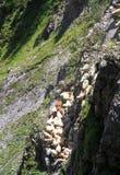 Alps shepherd festival stock photography