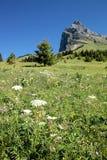 Alps spirit. Mountain panorama from fiescheralp and bettmeralp royalty free stock image