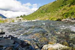 Alps stream. The stream of the Italian Alps in Livigno royalty free stock image