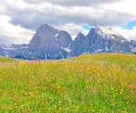 Alps summer Royalty Free Stock Photo